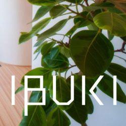 IBUKI柾 階段